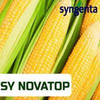 Кукуруза Syngenta CИ Новатоп (ФАО 240 Среднеранняя)