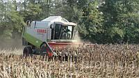 Совместное выращивание посевного материала подсолнечника и кукурузы