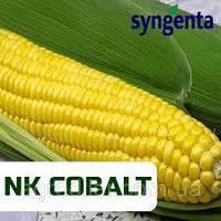 Кукуруза Syngenta НК Кобальт (ФАО 320 Среднеспелая)
