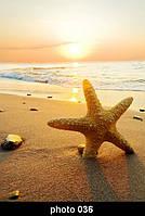 """Настенный обогреватель-картина Shine """"Морская звезда"""" 84x60 см."""