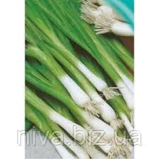 Ельвіра (Богемія) насіння цибулі на перо ранньої 110 днів Moravoseed 1 000 г