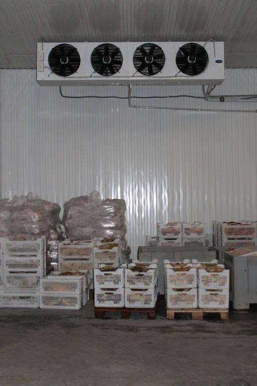 Морозильная камера для хранения замороженных продуктов 150м2, -18С
