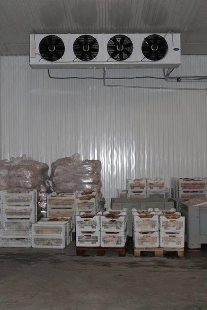 Морозильная камера для хранения замороженных продуктов 150м2, -18С 1