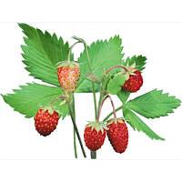 Ароматизатор Strawberries Flavor Drops (Земляника) 10мл
