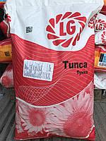 Семена подсолнуха Tunca Тунка (США).  Limagrain Лимагрейн 2016г -