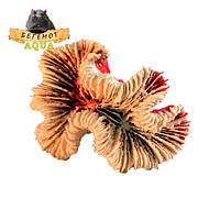 """Искусственный коралл """"Symphyllia"""" SM2"""