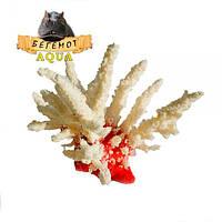 """Искусственный коралл """"Акропора"""" AP1"""
