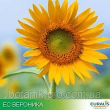 Семена подсолнечника ЕС Вероника (Euralis)