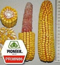 Семена кукурузы - PR38N86 Pioneer