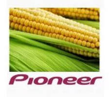 Семена кукурузы Пионер (Рioneer)