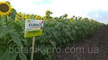 Семена подсолнечника ЕС Генезис под Евралайтинг+
