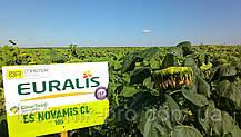 Семена подсолнечника ЕС Новамис КЛ (Clearfield гибрид)
