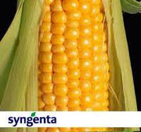 Кукуруза Syngenta Фурио (ФАО 350 Среднеспелая)