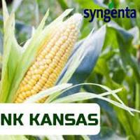 Кукуруза Syngenta НК Канзас (ФАО 290 Среднеранняя)