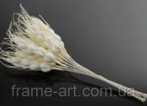 Колоски декоративный 17см 5-34697 белые