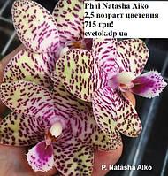 Подростки орхидеи, возраст цветения. Сорт Natasha Aiko