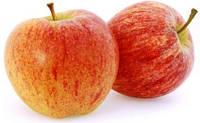 Гала, Gala саженцы яблони на подвое М 9