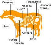 Синюга яловича., фото 1