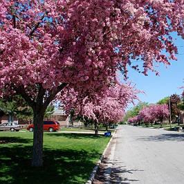 Саженцы лиственных деревьев