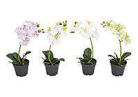 Орхидея Фаленопсис искусственная в пластиковом горшочке 15X6X17см