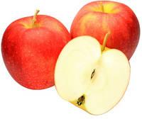 Джонаголд, Jonagold саженцы яблони на подвое М 9