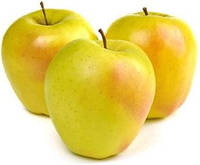 Голден Делишес, Golden Delicious саженцы яблони на подвое ММ 106