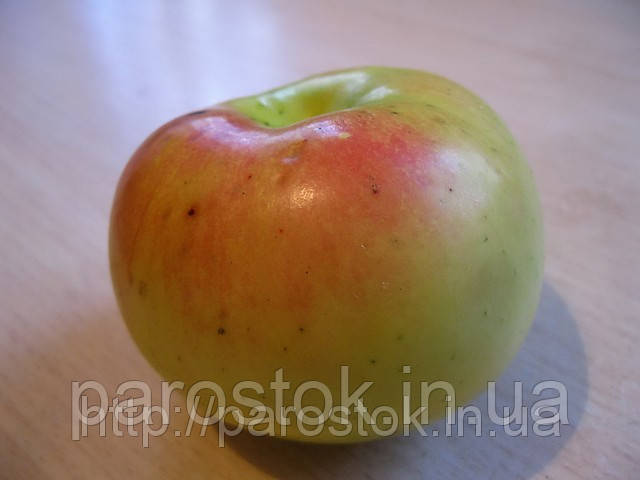 золотой ранет яблоня описание фото