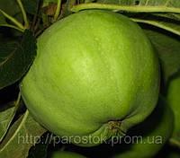 Яблоня Ренет Кубанский. (54-118) Зимний сорт.