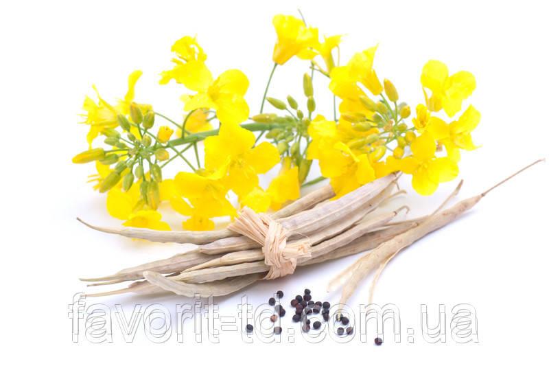 Семена озимого рапса Пионер ПР46В31/PR46W31