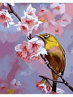 """Картина по номерам """"Колибри на яблоневой ветке"""" [40х50см, С Коробкой]"""