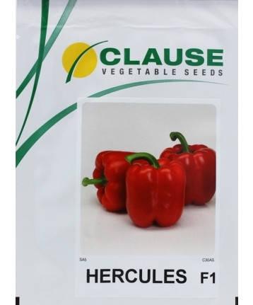 Насіння Перець солодкий Геркулес F1 HERCULES F1 20 шт Голандія, Clause (Клоз), фото 2