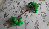 Калина цукрова - зелений колір