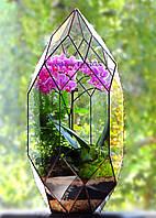 """Флорариум """"Комета"""" с орхидеей. Ширина -26 см, высота -55 см."""