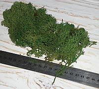Ісландський мох тм. зелений - стабілізовано, фото 1