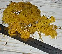 Исландский мох желтый - стабилизирован