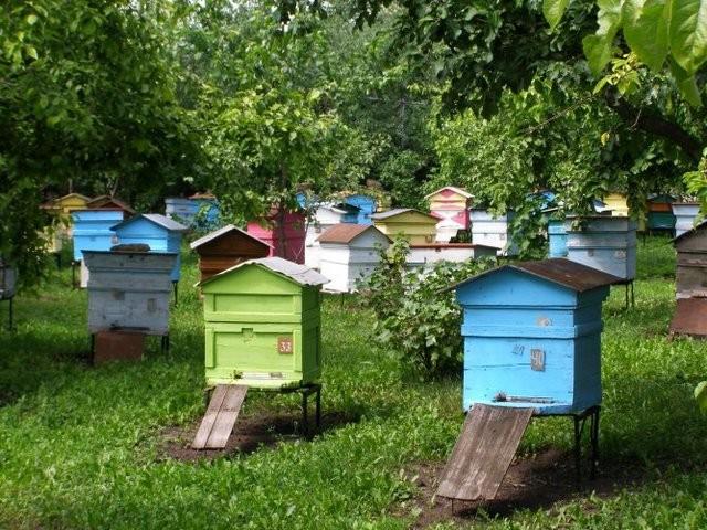 Защити своих пчел и свою пасеку!