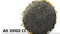 Гибрид подсолнечника АС 33102 КЛ устойчивый к Евролайтингу