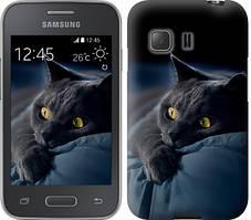 """Чехол на Samsung Galaxy Young 2 G130h Дымчатый кот """"825u-206-481"""""""