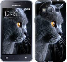 """Чехол на Samsung Galaxy J1 (2016) Duos J120H Красивый кот """"3038c-262-481"""""""