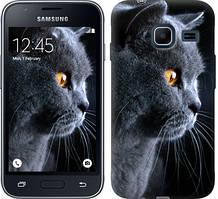 "Чехол на Samsung Galaxy J1 Mini J105H Красивый кот ""3038c-258-481"""