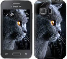 """Чехол на Samsung Galaxy Young 2 G130h Красивый кот """"3038u-206-481"""""""