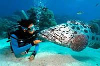 Дайвинг-Тур в Эйлат «Дайвинг в коралловом заповеднике Красного моря».Вилла+Курс 2 звезды+Серт. PADI за 7 дней