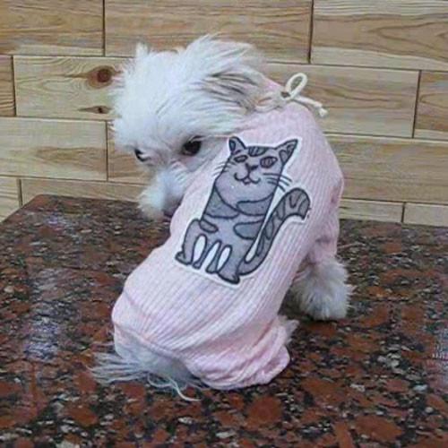 """Костюм  """"Котики""""  24см  Vip Doggy  размер  SS"""