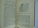 Джилберт Э., Коттерелл М. Тайны майя (б/у)., фото 7