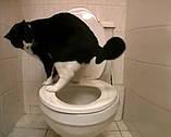 Система приучения кошек к унитазу Citi Kitty Cat Toilet Training Kit, набор для кошек, фото 4