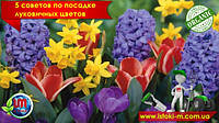 5 советов по посадке луковичных цветов