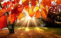 Осень!)