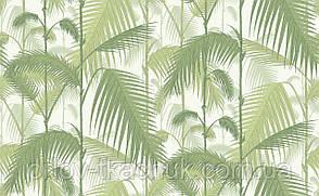 Обои флизелиновые Palm Jungle Cole&Son