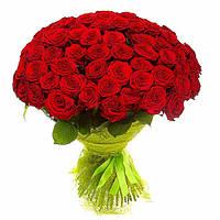 Роза красная 50см 101шт (СОРТ ВЫСШИЙ)