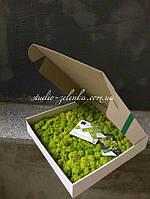 Гибкие панели из стабилизированного мха от Студии Зеленка